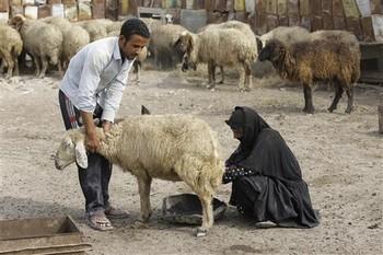 Western Baghdad Sheep