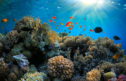 Protected oceans