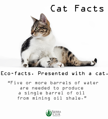 Cat Facts_oil shale_ecofacts