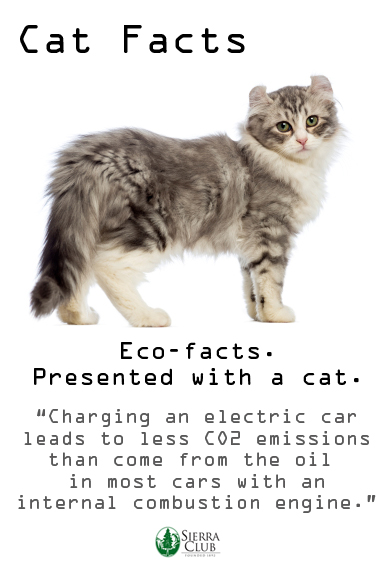 Cat facts_electric vehicles
