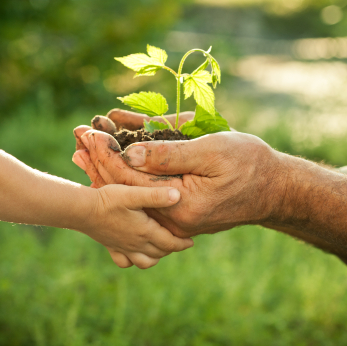 Two pairs of hands hold small plant