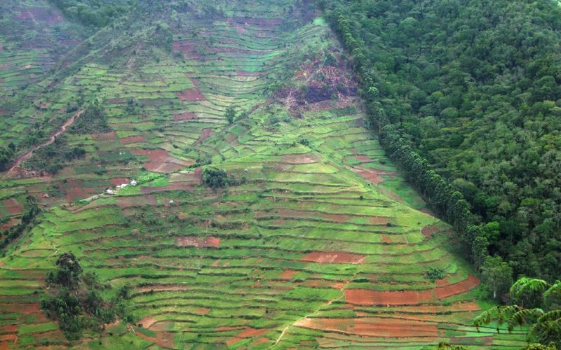 Palm oil plantations often require deforestation